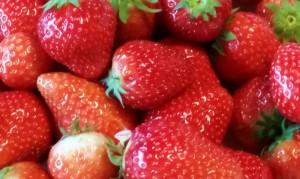 frische Erdbeereen